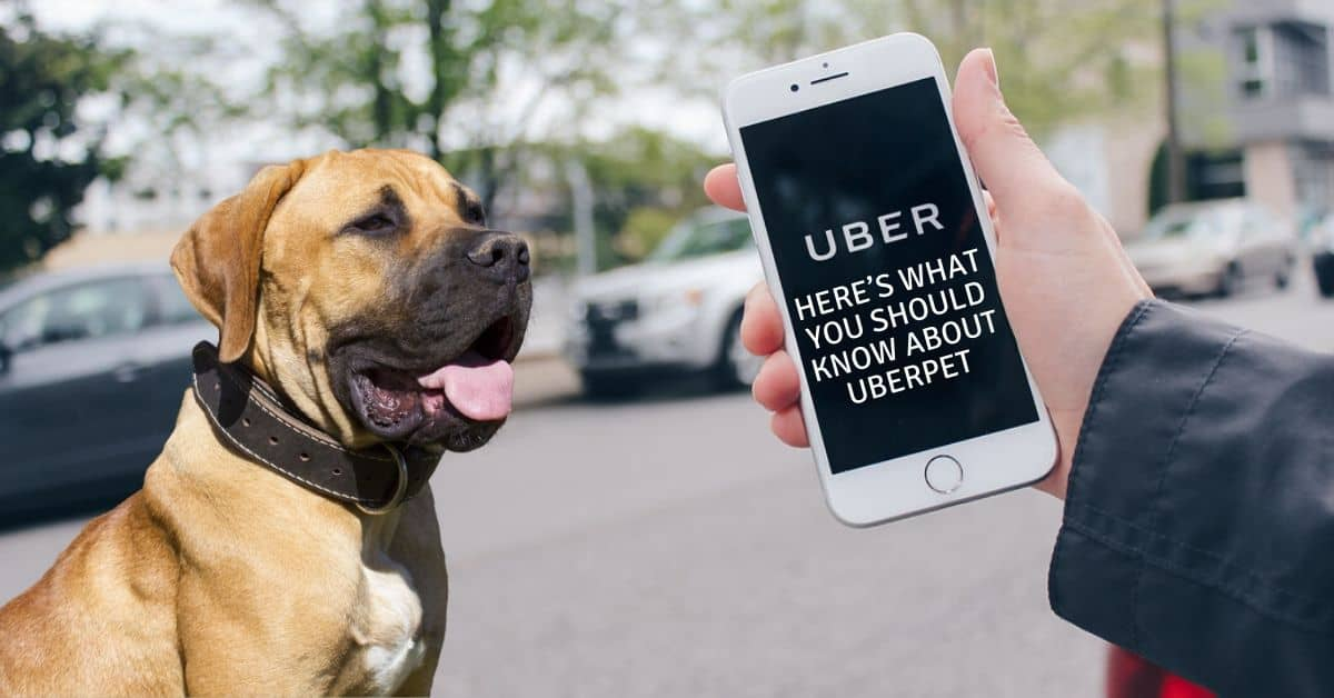 Here's What You Should Know About uberPET 1