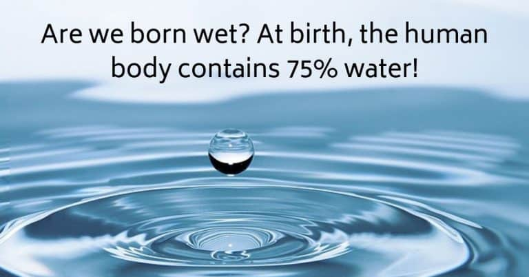 Are we born wet? At birth, the human body contains 75% water!